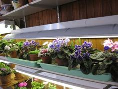 Lampes Fluorescentes Pour Les Plantes Jardinier Paresseux