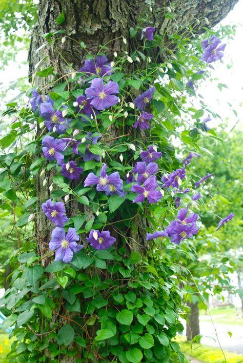 plante grimpante sur arbre