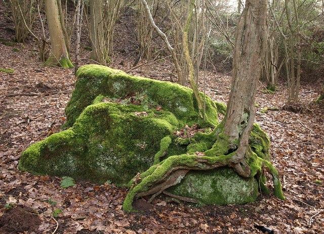 cultiver de la mousse sur des pierres – jardinier paresseux