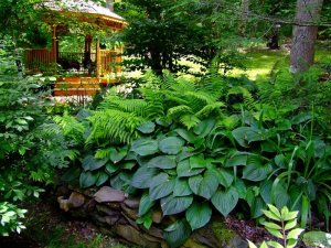 Most-beautiful-gardens-Landscape-Design-Fern-3