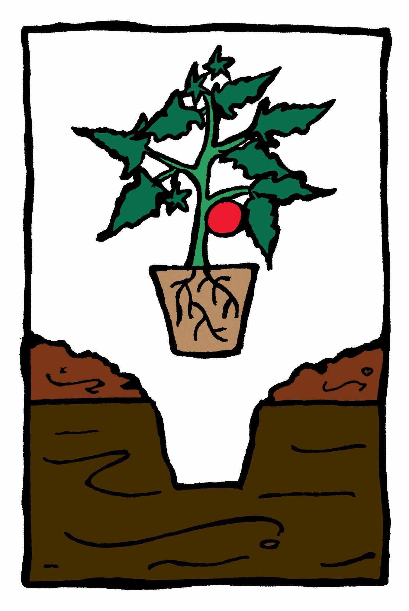 Paillis Noix De Coco comment utiliser du paillis dans un potager – jardinier