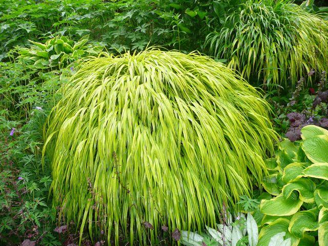 Des gramin es ornementales qui restent leur place for Hardy grasses for the garden