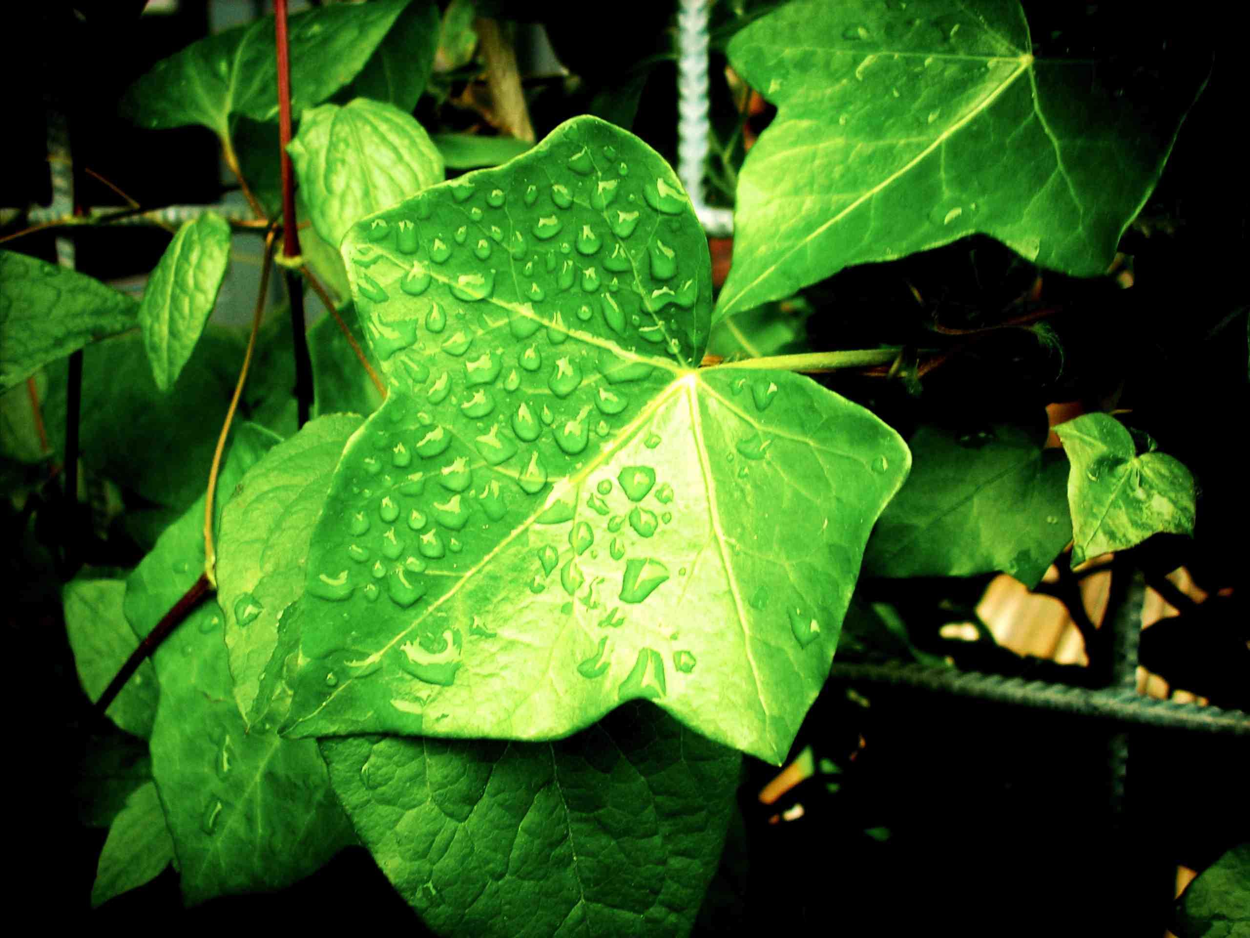 Douche pour plantes d int rieur jardinier paresseux for Plante interieur pendante