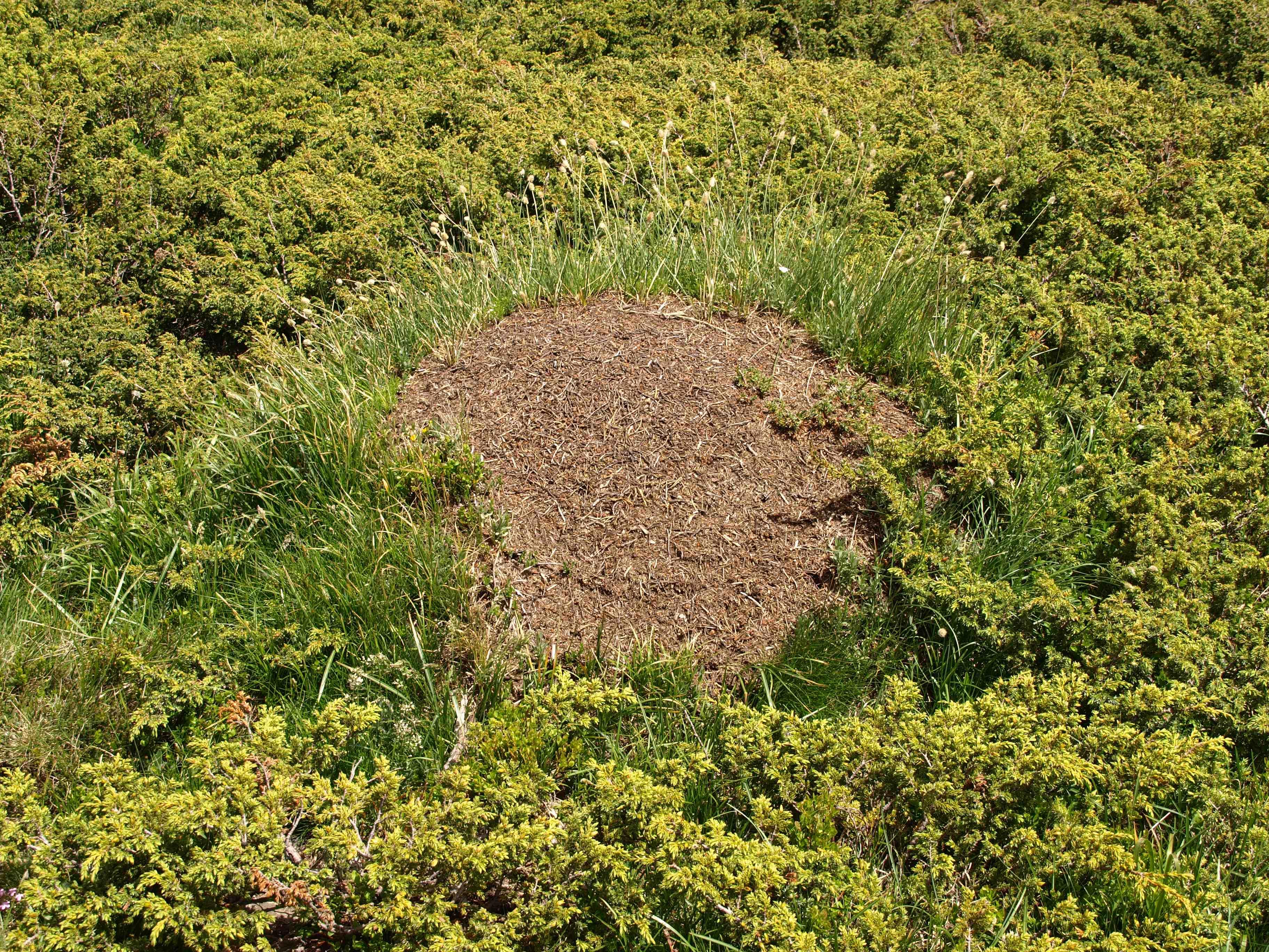 Grosses Fourmis Noires Dans Le Jardin les fourmis détruisent mon gazon! – jardinier paresseux