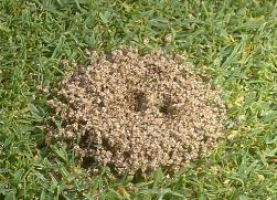 ants08