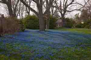 Pelouse bleue