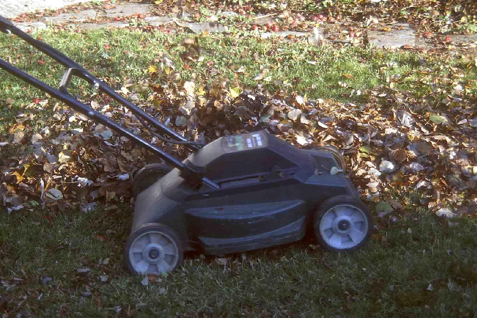 Compost De Feuilles D Érable les feuilles d'automne: déchiquetez-les avant usage