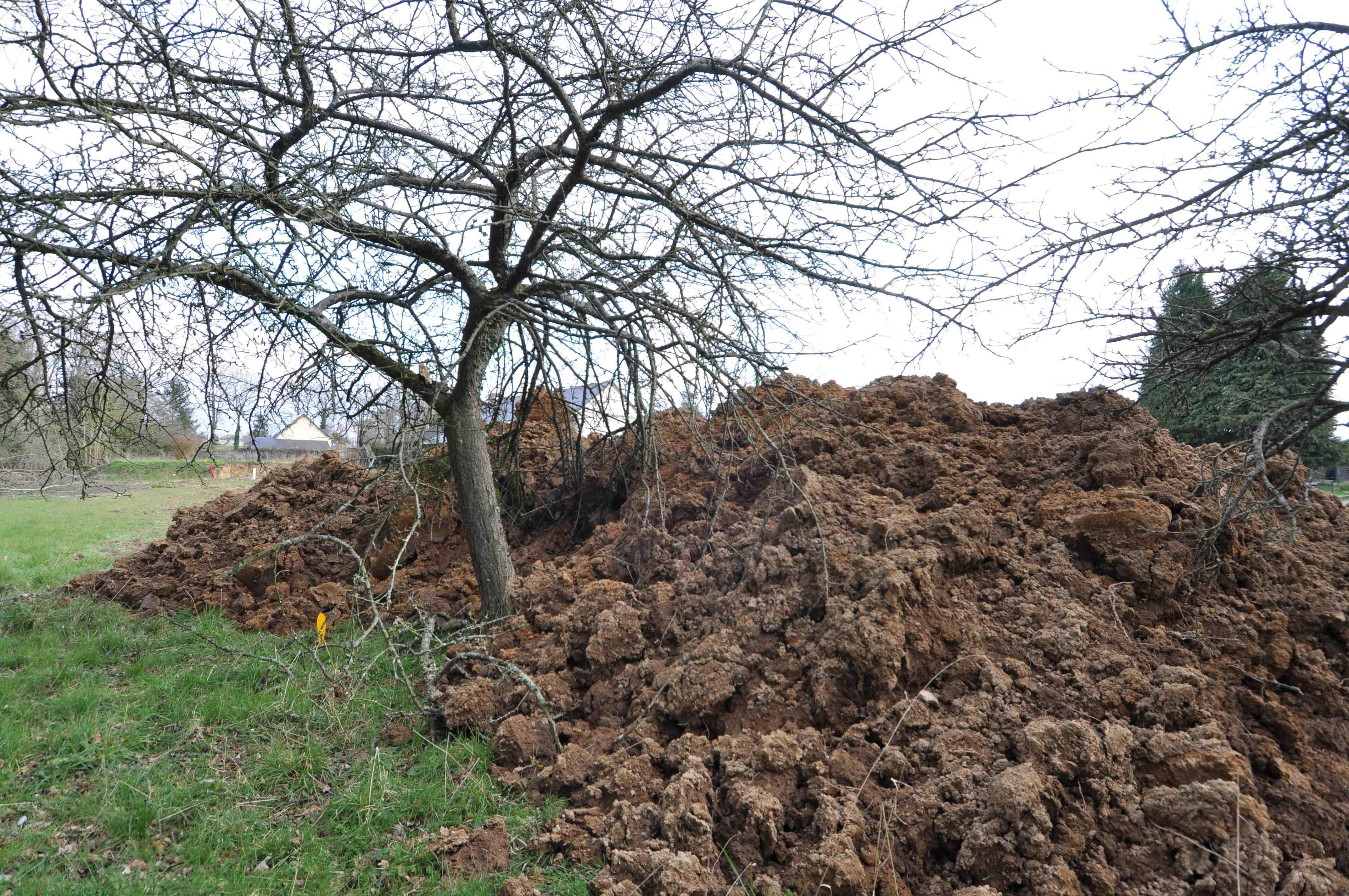 Pas trop de terre sur les racines d un arbre jardinier for Bordure autour d un arbre