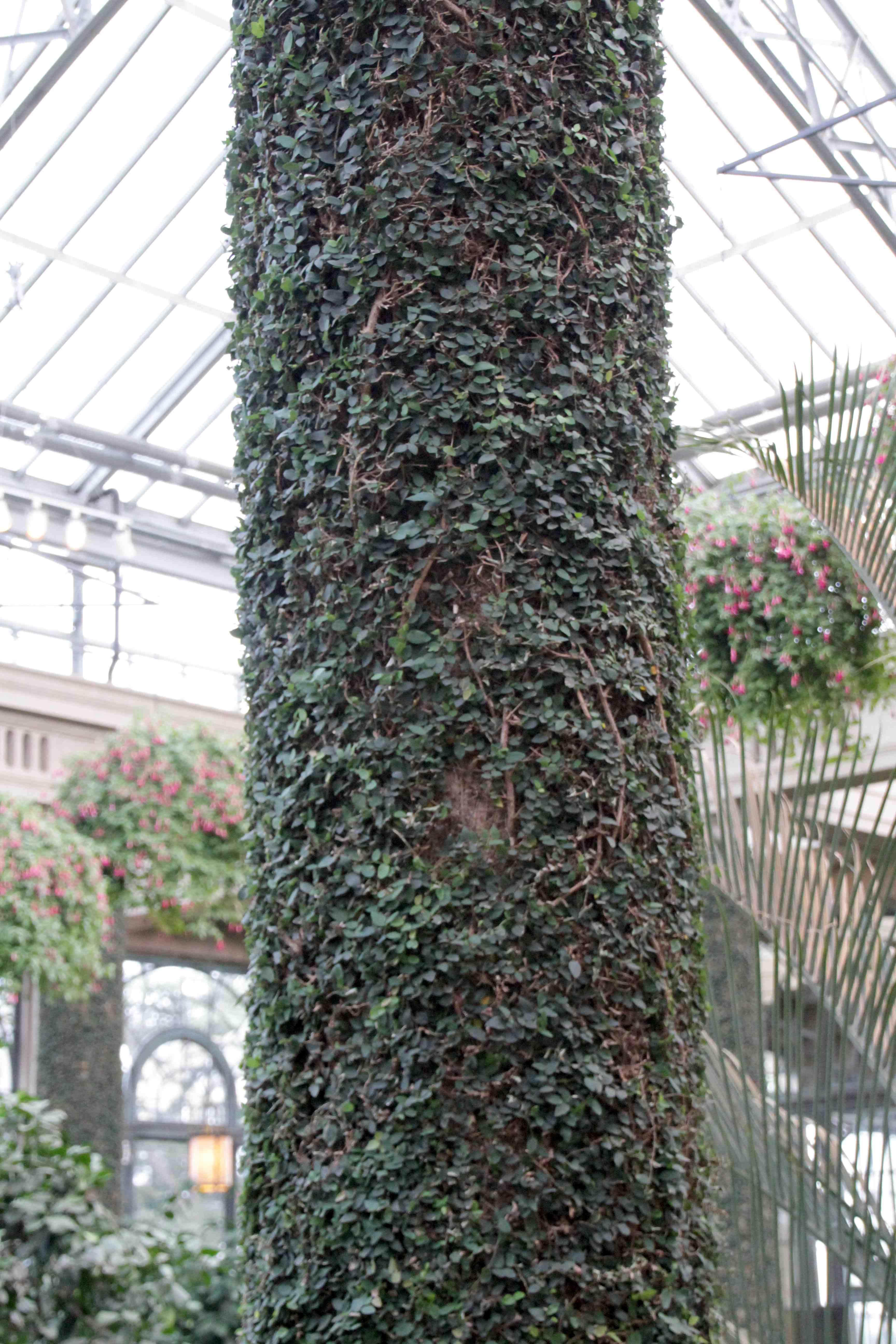 Une plante qui tapisse les murs int rieurs jardinier for Fenetre qui rentre dans le mur
