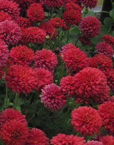 3. Power_Surge-flowers2