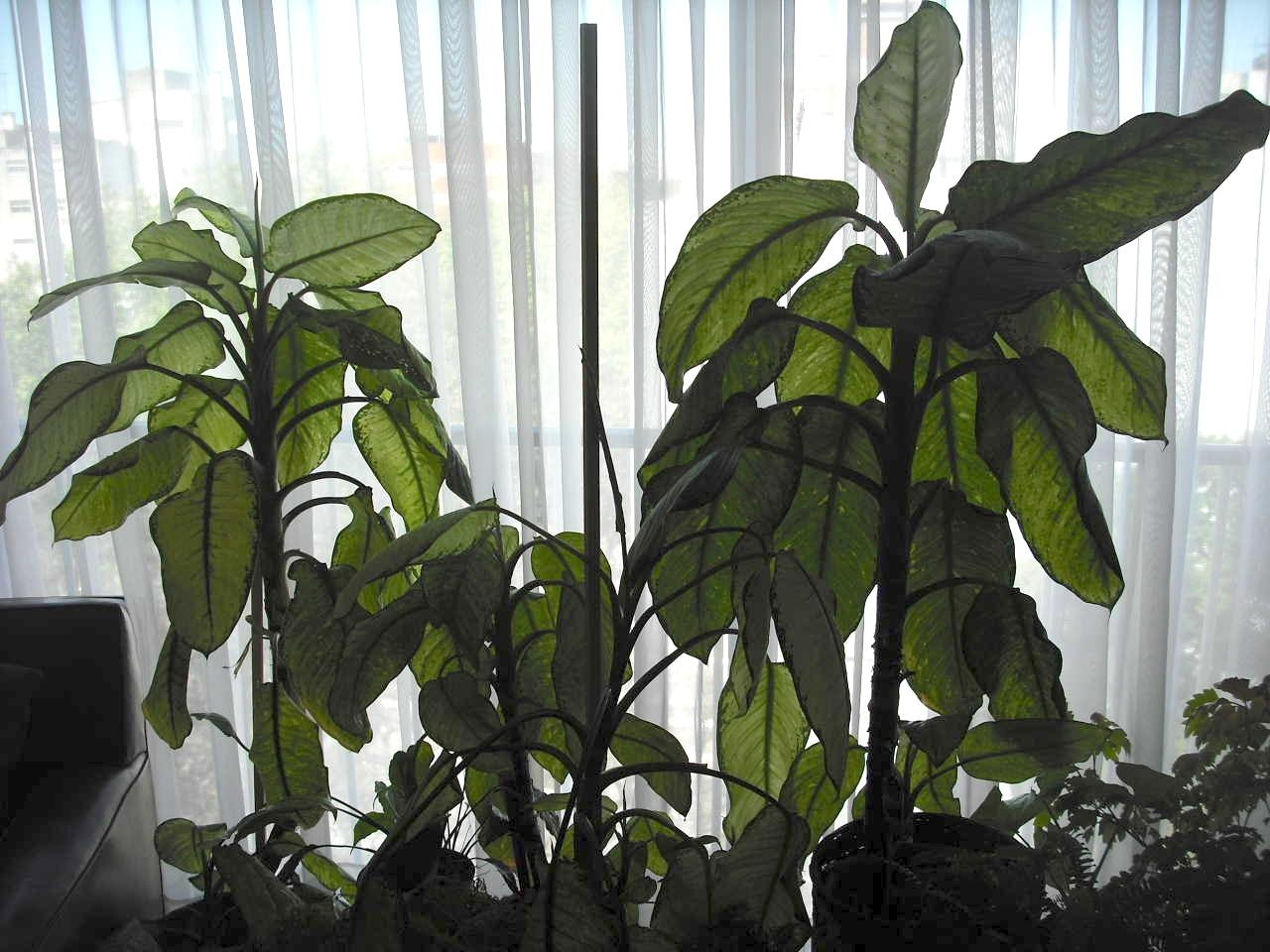 utilisez les plantes d int rieur comme aspirateur jardinier paresseux. Black Bedroom Furniture Sets. Home Design Ideas