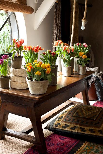 Forcer des bulbes pour un printemps h tif jardinier paresseux - Quand planter les bulbes de tulipes et jonquilles ...