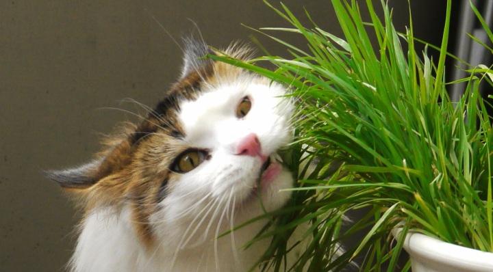 plantes non toxiques pour les chats – jardinier paresseux