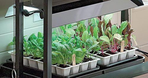 Des fluorescents cool jardinier paresseux - Led para cultivo interior informacion ...