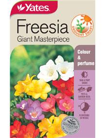 freesia-giant-masterpiece.jpg