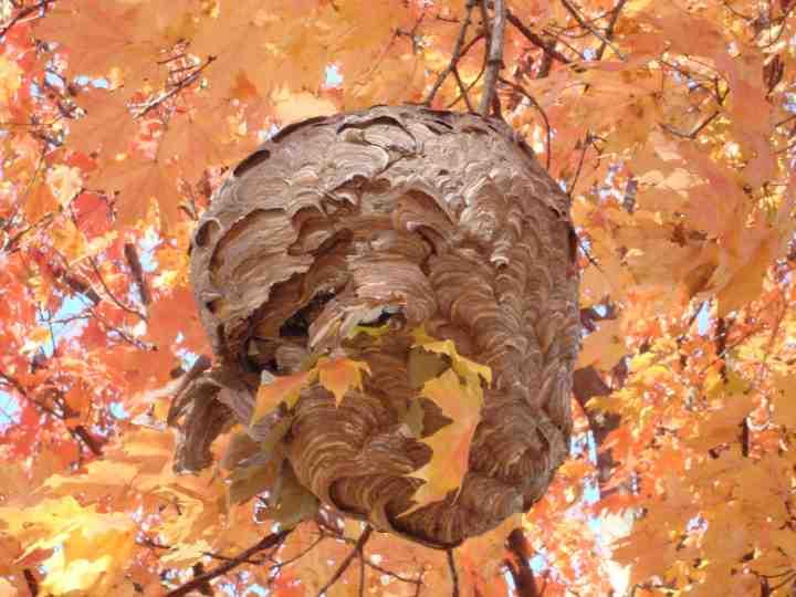 les faux nids de gu pes fonctionnent ils vraiment jardinier paresseux. Black Bedroom Furniture Sets. Home Design Ideas