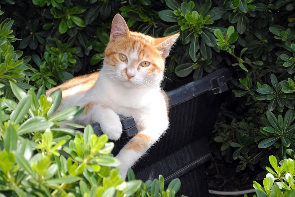 Chasser les chats du jardin jardinier paresseux - Eloigner les chats du jardin ...