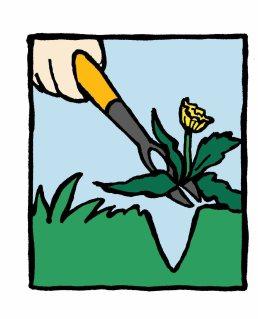 Arrachez la mauvaise herbe.