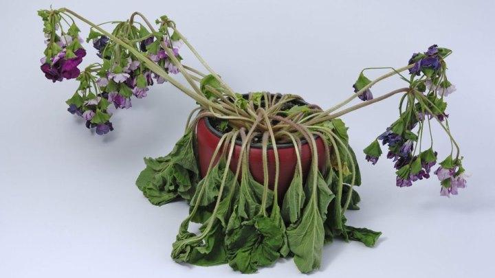 souffrez vous de l indiff rence pour les plantes jardinier paresseux. Black Bedroom Furniture Sets. Home Design Ideas