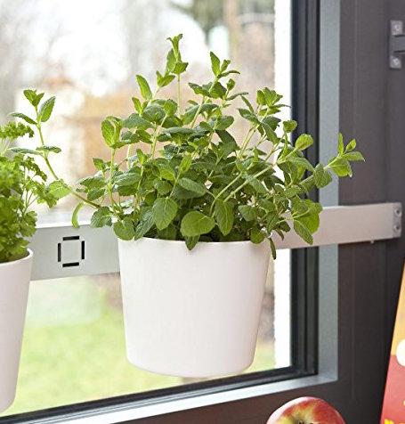 peut on sauver les fines herbes de supermarch jardinier paresseux. Black Bedroom Furniture Sets. Home Design Ideas