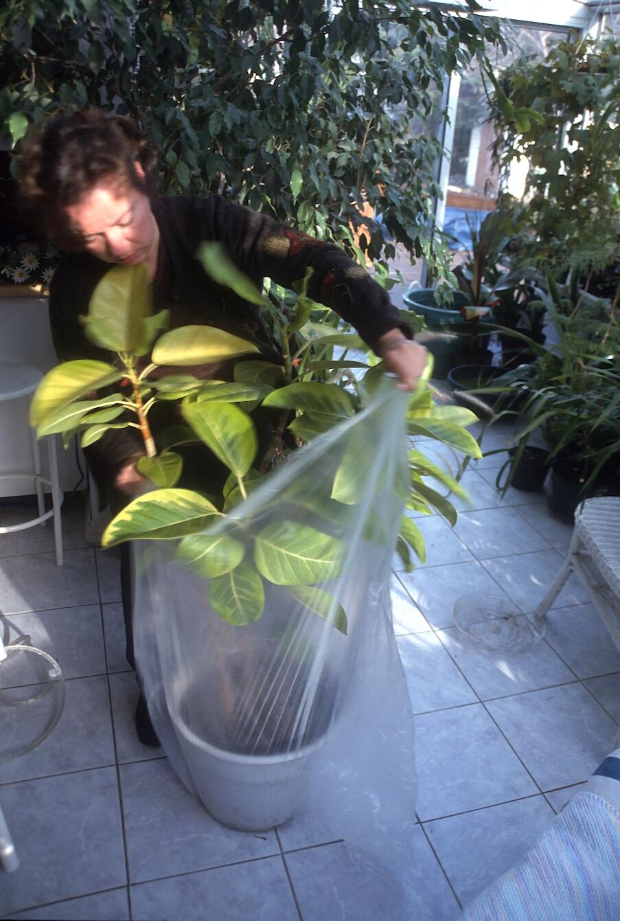 Comment Arroser Mes Plantes Pendant Les Vacances arroser plantes pendant les vacances – jardinier paresseux