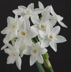 Fleur De Naissance Avril Jardinier Paresseux