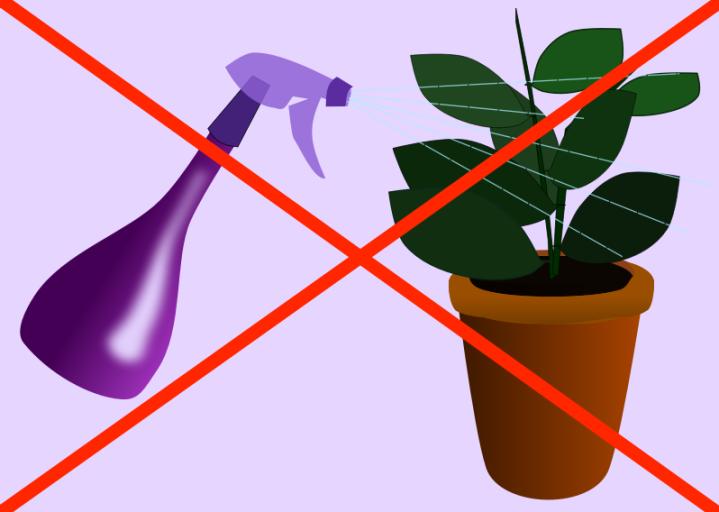La brumisation des plantes d int rieur jardinier paresseux - Plante interieur anti humidite ...