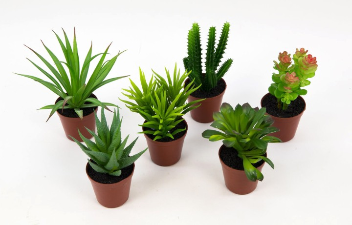 terrarium de cactus et de succulentes une bien mauvaise id e jardinier paresseux. Black Bedroom Furniture Sets. Home Design Ideas