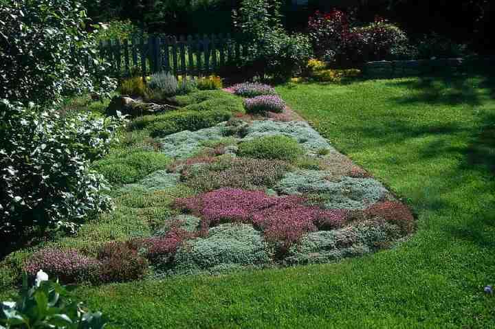 des plantes couvre sol pour le soleil jardinier paresseux. Black Bedroom Furniture Sets. Home Design Ideas