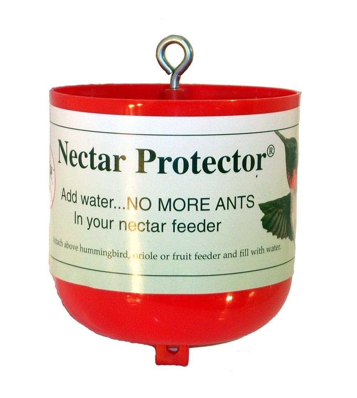 loignez les fourmis de votre mangeoire colibri jardinier paresseux. Black Bedroom Furniture Sets. Home Design Ideas
