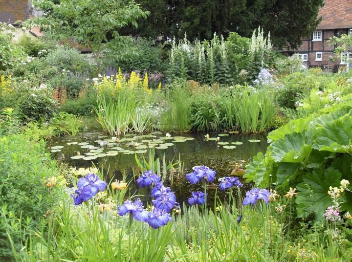 20170726B Lilies Water Gardens.jpg