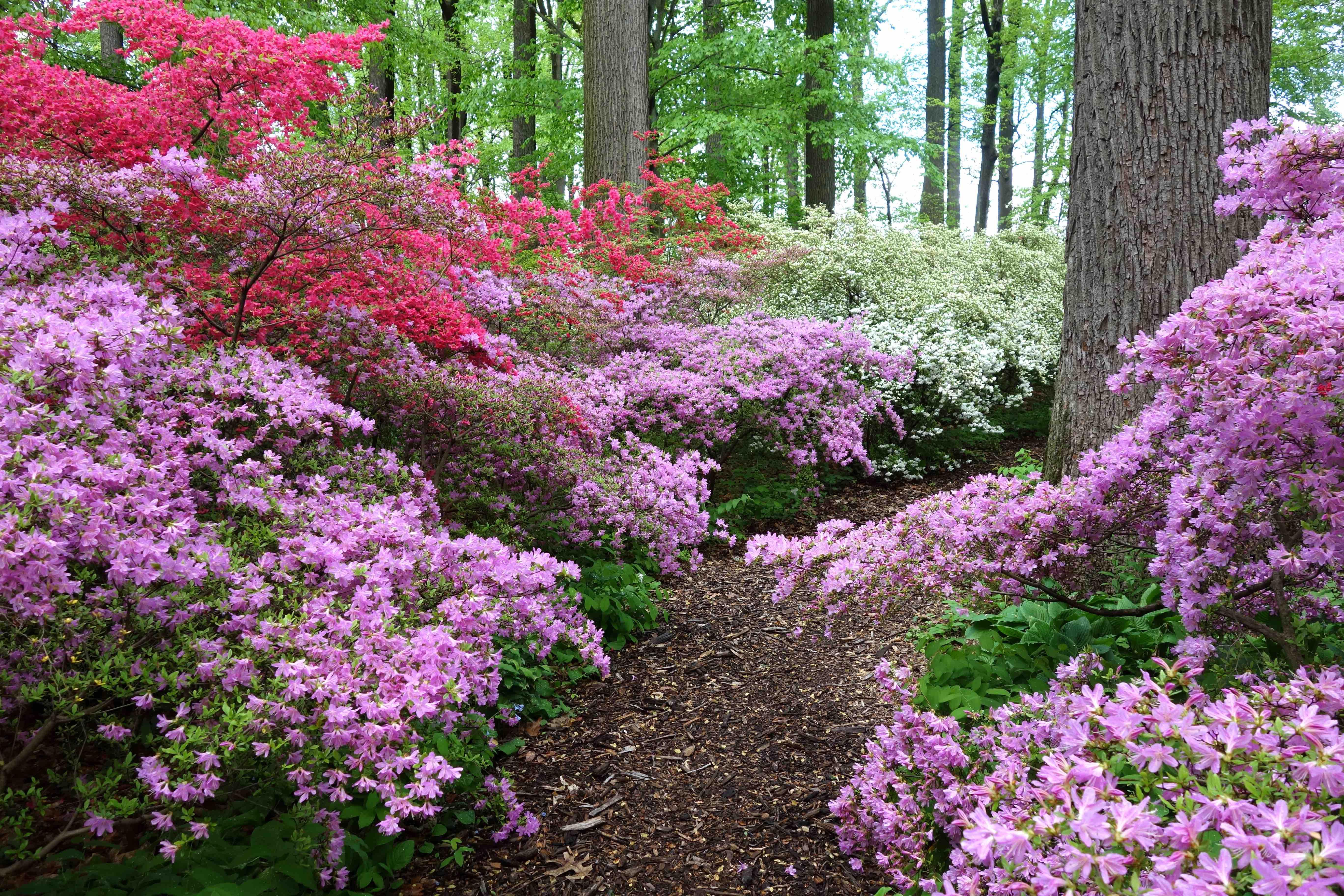 arbuste sol humide good arbres et arbustes haie libre et