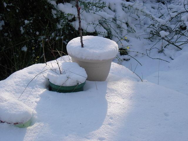 comment hiverner les plantes rustiques cultiv es en pot jardinier paresseux. Black Bedroom Furniture Sets. Home Design Ideas