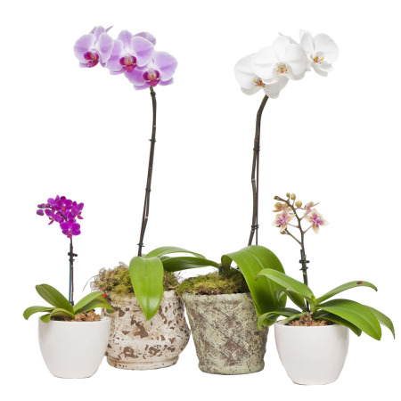 orchidee jardinier paresseux