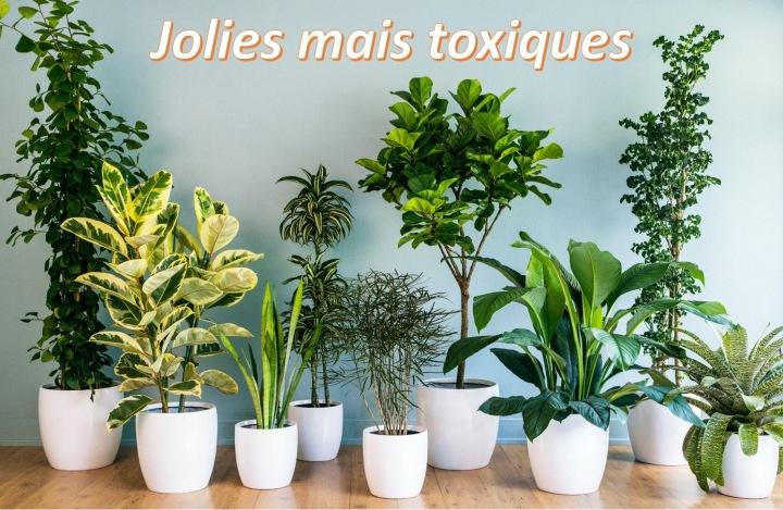 plante interieur toxique chat