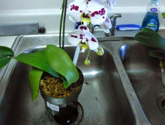20171201C orchidobessionblog.blogspot.com.jpg