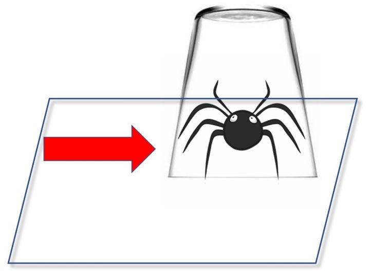 d placez les araign es plut t que de les tuer jardinier paresseux. Black Bedroom Furniture Sets. Home Design Ideas