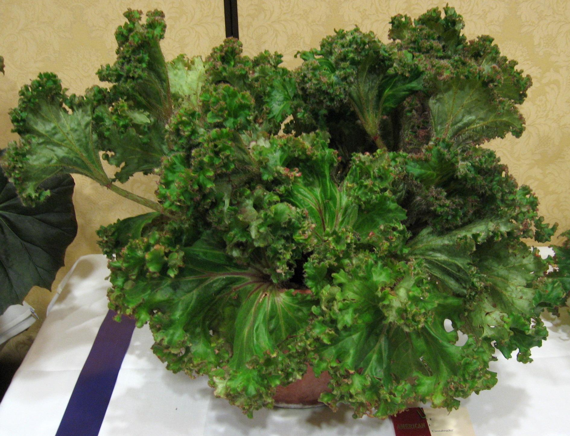 Quatre autres plantes aux feuilles bizarres jardinier for Nettoyer feuilles plantes