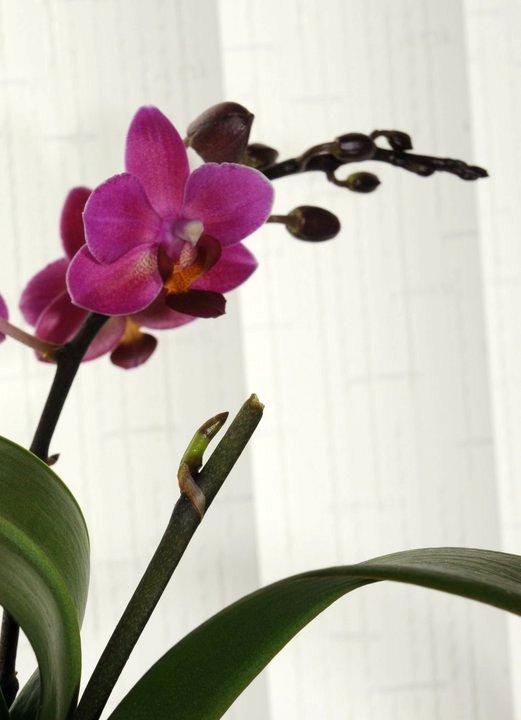 Jardinier paresseux tout sur le jardinage facile avec - Comment couper la tige d une orchidee apres floraison ...