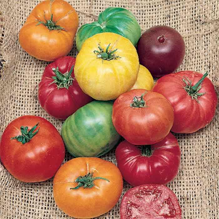 20180201B Tomates en mélange www.jungseed.com.jpg