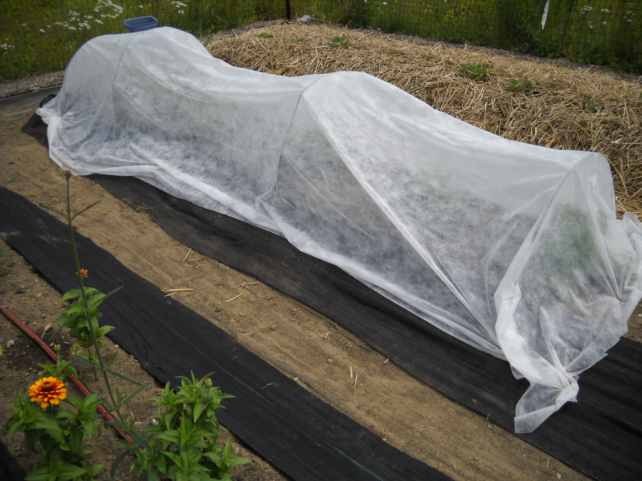 20180518C www.gardening-guy.com.jpg