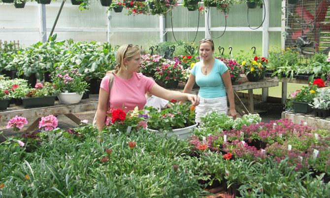 Comment choisir les meilleures annuelles jardinier for Viveros de plantas en buin