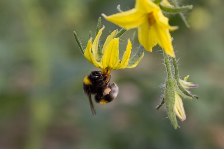 20180715M gardening.usask.ca.jpg