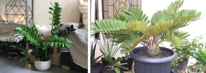 20181017C www.plantsrescue.com & www.gumtree.com.jpg