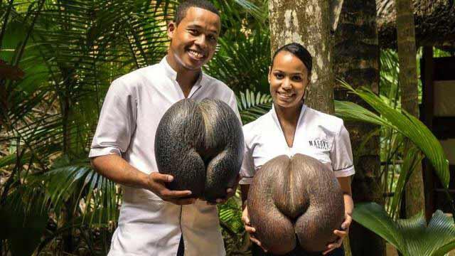 gros Cocos