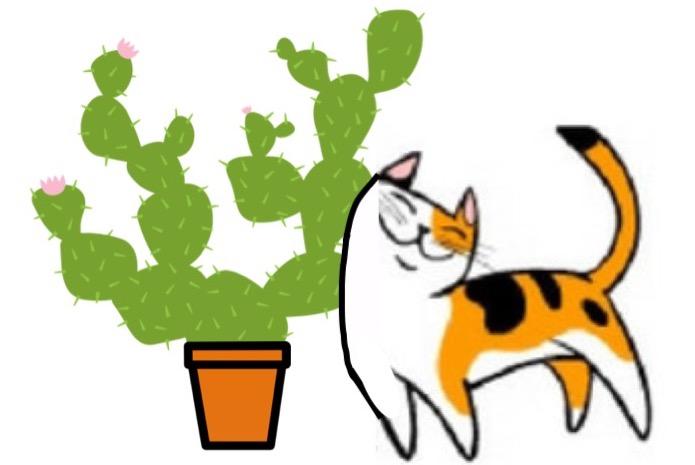 quand un chat a fr l un cactus qui s y frotte s y pique jardinier paresseux. Black Bedroom Furniture Sets. Home Design Ideas