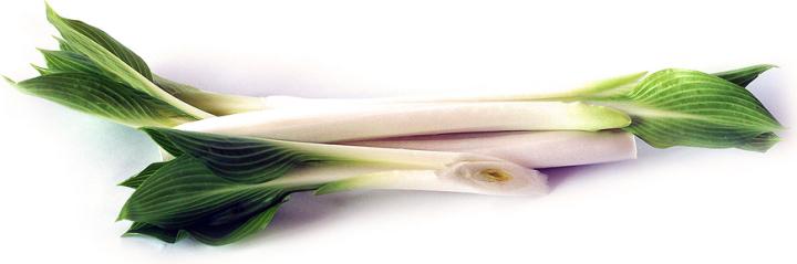 Dix mythes sur les hostas 20190106G-speciality-produce