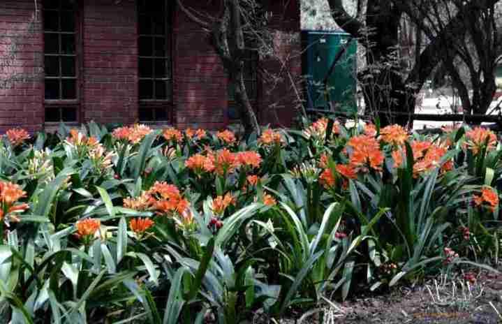 20190108C Bloemfontein Botanical Garden, aristonorganic.wordpress.com.jpg