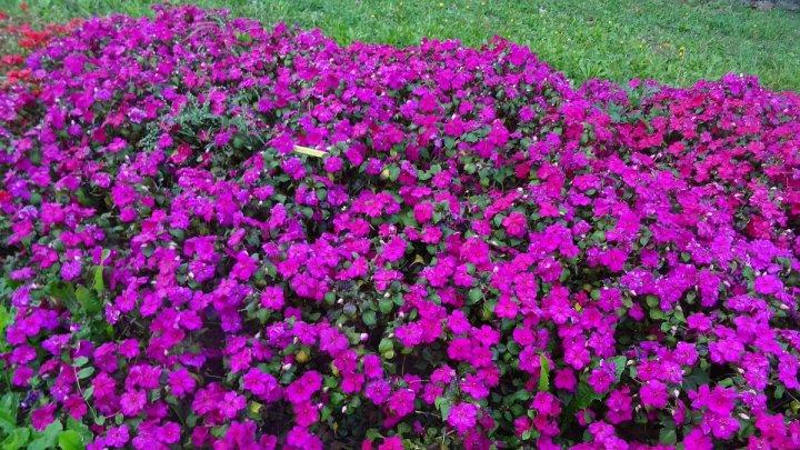 20190206D Sygenta Flowers Europe.jpg