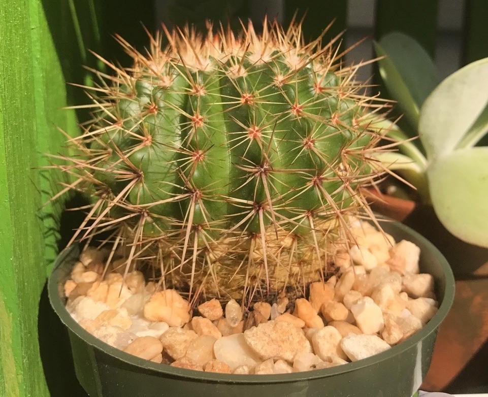 20190212B los-plantalones.tumblr.com